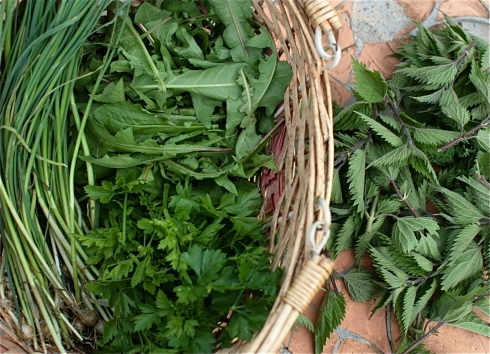 Foraged freebie goodies of Nettles, Dandelion Leaves and Wild Garlic. Plus Parsley from the garden.